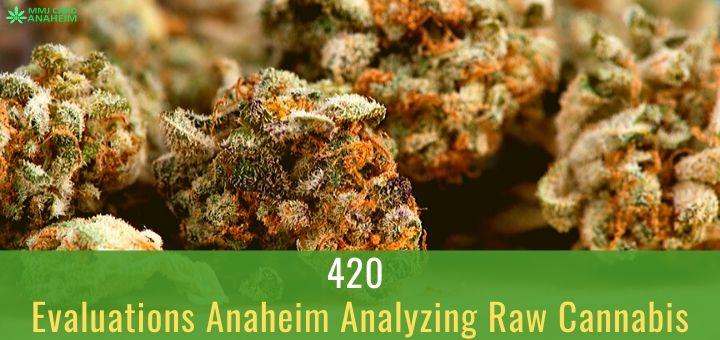420 Evaluations Anaheim Analyzing Raw Cannabis