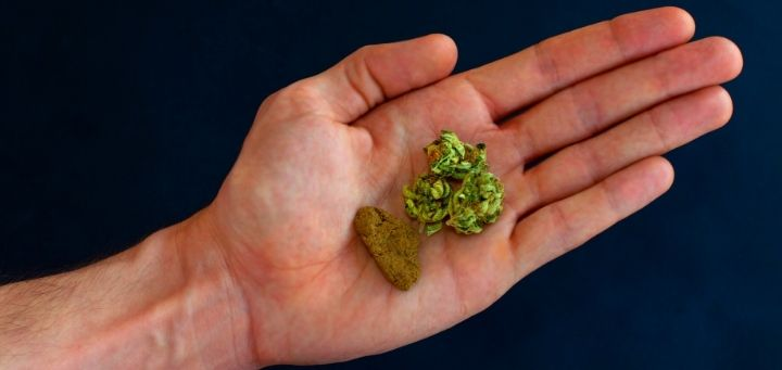 Bubble Hash: A Small Guide of The Cannabis Co
